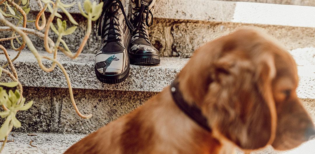 Abbildung von DOGO-Schuhen mit Hundemotiv und einem Hund